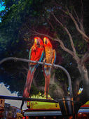 Two large parrots — Stockfoto