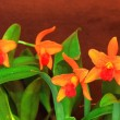Orange orchid flower — Stock Photo