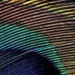 Peacock feather detail — Stock Photo