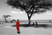 Maasai — Stock Photo