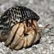 Hermit Crab — Stock Photo #36506751