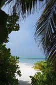 Ocean View through Tropic Vegetation — Foto Stock