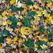Stock Photo: Carpet of autumn leaves