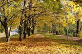 Callejón de arces en el parque de la ciudad — Foto de Stock