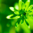 Abstract green flower — Stock Photo #24952019