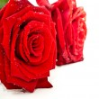 Stock Photo: Red rose petals as token of love