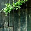Dark colored boards with plant — Stockfoto