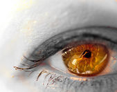 Close up of beautiful brown eye — Stock Photo