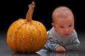 Little pumpkins — Stock Photo