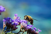 Bee at flowers — Stock Photo