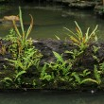 Green Nature — Stock Photo #12015135
