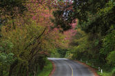 Nature road — Stock Photo