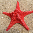 Stock Photo: Red seastar on sand