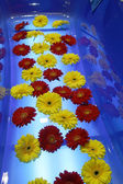 Flowers in the bath — Stock Photo