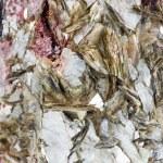 Tourmaline and muscovite mineral — Stock Photo