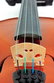 Violin detail — Stock Photo