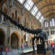 Natural history museum London — Stock Photo