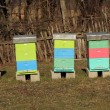 Bee Hive — Stock Photo #41352273