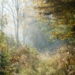 Stock Photo: Path through misty forest