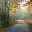 Forest road in autumn scenery — Stock Photo