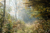 Path through misty forest — Stock Photo