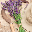 Harvesting lavender — Stock Photo