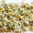 Stock Photo: Drying camomile