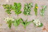 Variety of fresh herbs — Stock Photo