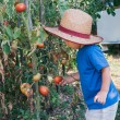 Little farmer in organic garden — Stock Photo