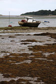 Low tide in Northern Ireland — Stock Photo