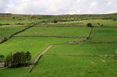Hügeln mit grünen wiesen und schafe — Stockfoto