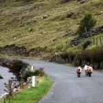 Three sheeps walking on an empty road in Connemara — Stock Photo