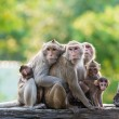 Monkey family — Stock Photo #31964369