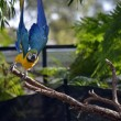 Macaw — Stock Photo #27060767