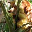 Joey tree kangaroo — Stock fotografie