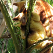 Joey tree kangaroo — Stock Photo