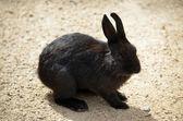 Coniglietto — Foto Stock
