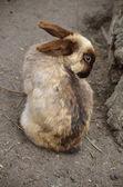 Bunny — Stock Photo