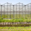 Stock Photo: Greenhouse in Westland in Netherlands