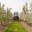 Mowing grass in blossoming orchard in Holland — Stockfoto