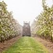 Treating blossoming apple treas by spraying — Stock Photo