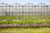 Greenhouse in Westland in The Netherlands — Stock Photo