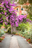 Flowers in garden in Italy — Stock Photo