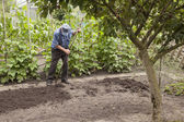 Old man working in vegetable garden — Stock Photo