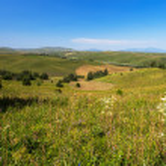 Field summer mountain Altay — Stock Photo