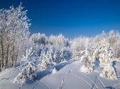 Winter snow — Stock Photo