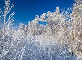Neve do inverno — Foto Stock