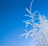 Neve d'inverno — Foto Stock