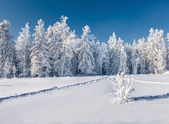 Neve d'inverno — Foto Stock