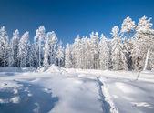 зимний снег — Стоковое фото